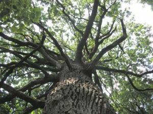 паркетная доска беленый дуб в интерьере фото